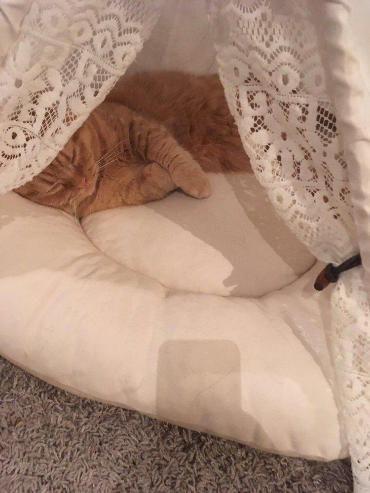 Cat Apartment Coffee