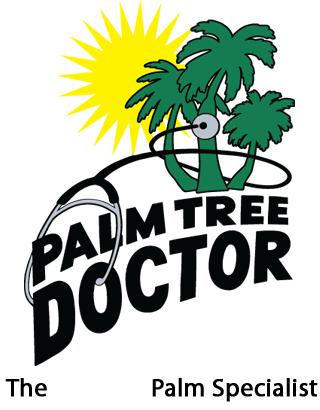Palm Tree Doctor