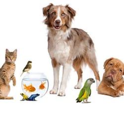 Garden City Veterinary Hospital 11 Billeder Dyrl Ger 30579 Ford Rd Garden City Mi Usa