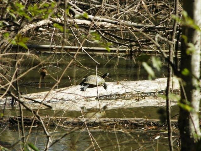Wheeler National Wildlife Refuge: 3121 Visitors Center Rd, Decatur, AL