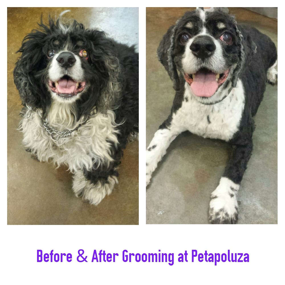 Petapoluza Pet Supply & Grooming