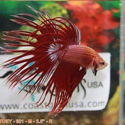 Coast Gem USA - (New) 216 Photos & 105 Reviews - Aquarium