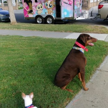 Ed f 39 s reviews riverside yelp for 4 paws pet salon