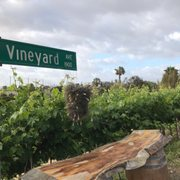 Photo Of Newport Beach Vineyards Winery Ca United States