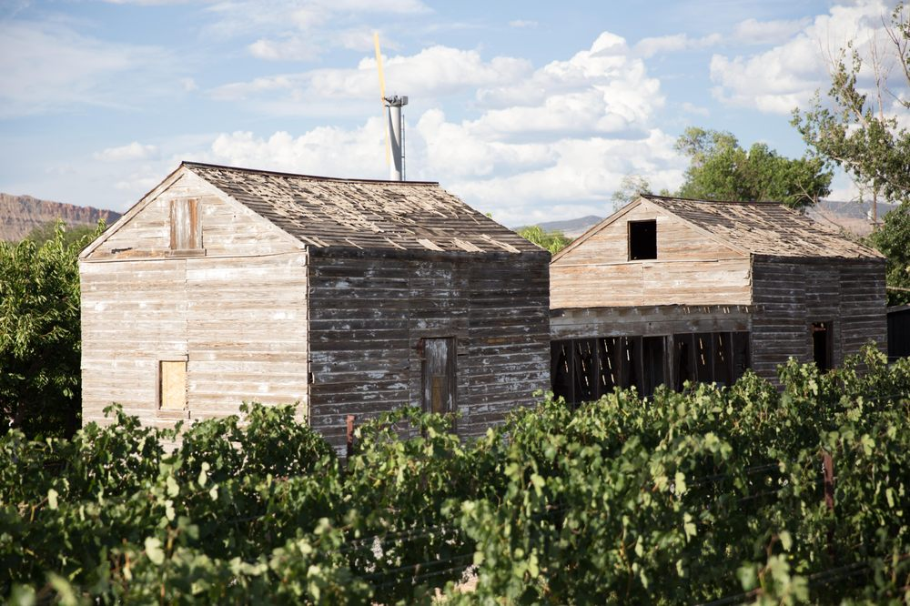 Restoration Vineyards: 3594 E 1/2 Rd, Palisade, CO