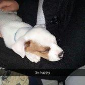 great dog rescue ne andover ma