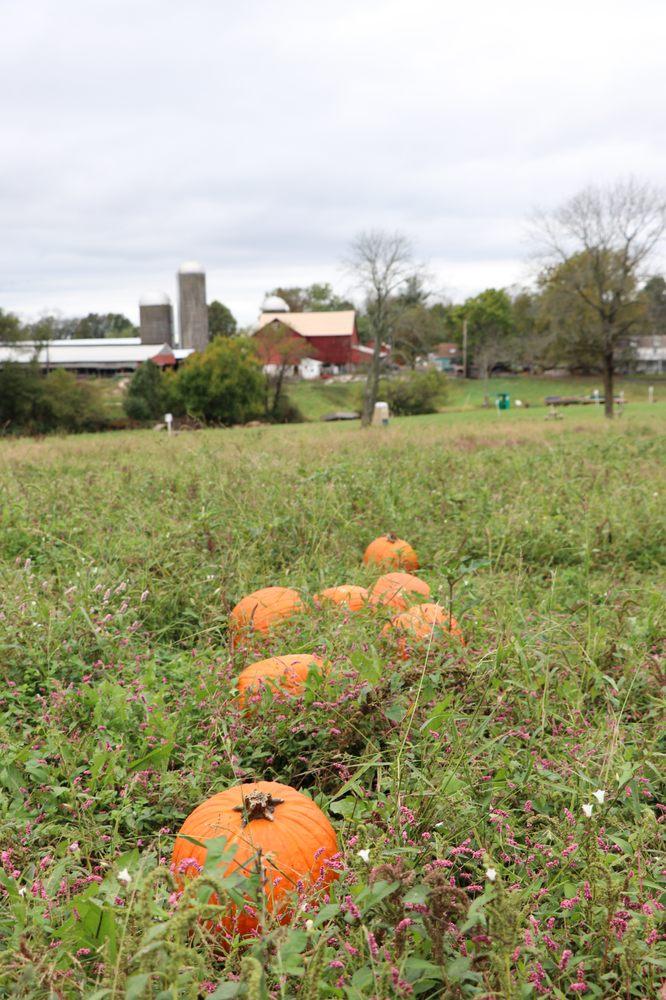 Winding Brook Farm