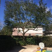 Photo Of Highpoint Tree Care The Woodlands Tx United States This