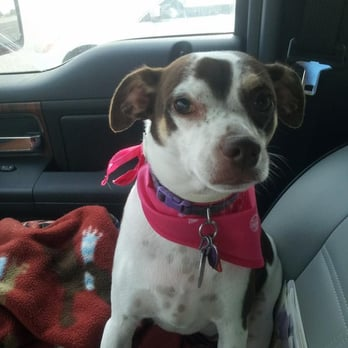 PetSmart - Pet Training - 3615 N Rock Rd, Wichita, KS - Phone ...