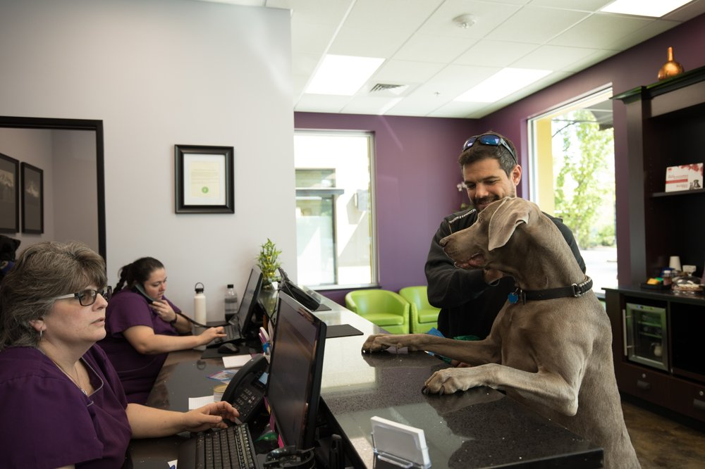 Pawsitive Wellness Veterinary Care: 2759 Shadow View Dr, Eugene, OR