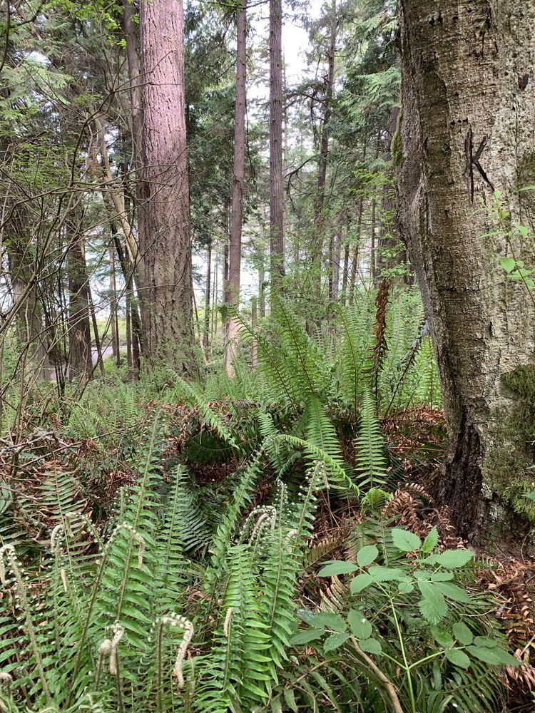 Pioneer Trails Campground: 7337 Miller Rd, Anacortes, WA