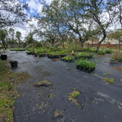 Photo Of Biosphere Nursery Winter Garden Fl United States