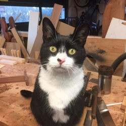 arm n hammer cat litter
