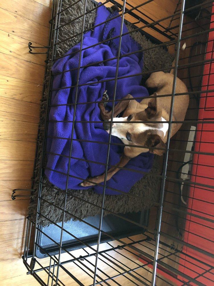 Rocket Dog Rescue - 58 Photos & 154 Reviews - Animal