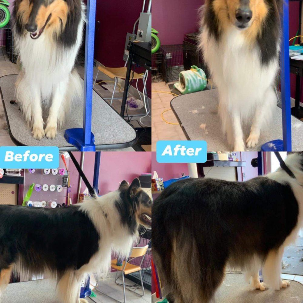 Dal Santo's Doggie Stylez: 3234 Ridge Rd, Lansing, IL