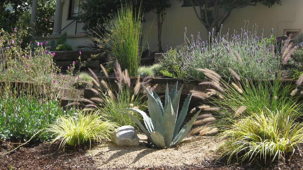 drought tolerant plants  desert landscape ideas