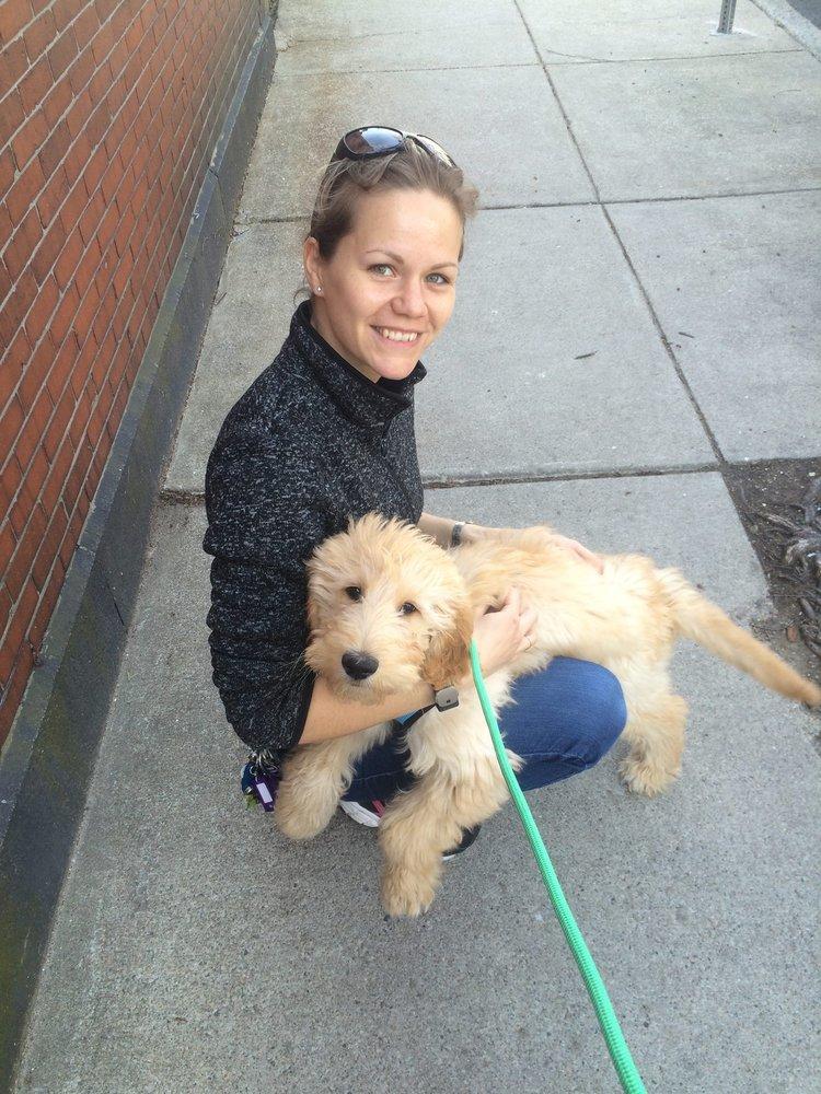 HighPaw Dog Training: Braintree, MA