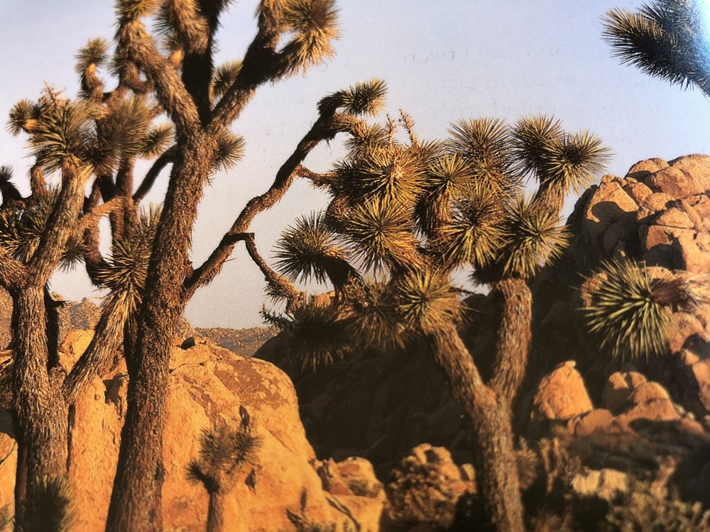 The Desert Lily: 8523 Star Ln, Joshua Tree, CA