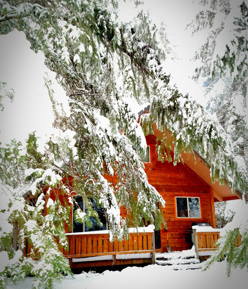 Betsy's Cabins at Mount Rainier: Ashford, WA