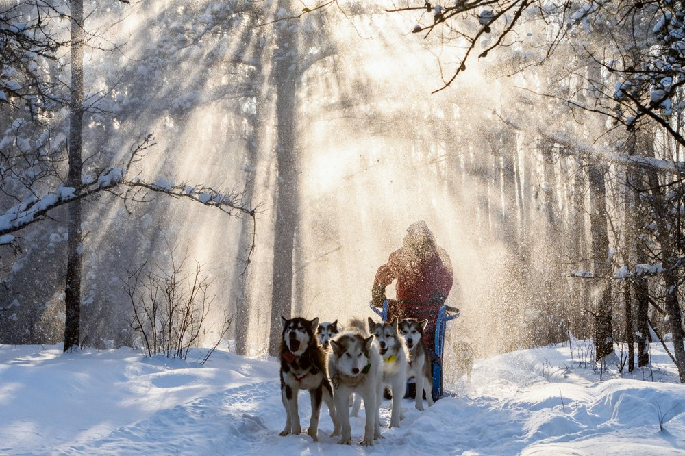 Wintergreen Dog Sled Lodge: 1101 Ringrock Rd, Ely, MN