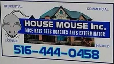 House Mouse: 46 Handcock St, Little Falls, NY