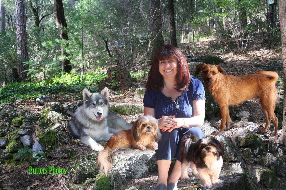 Paragon Dog Obedience: Cobb, CA