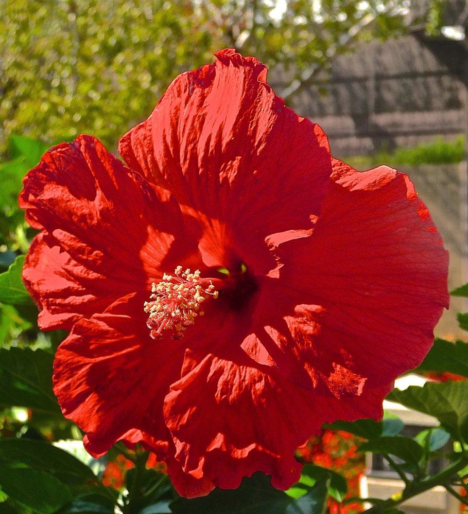 Botanica, The Wichita Gardens: 701 Amidon St, Wichita, KS
