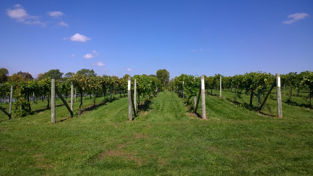 Woodland Hill Winery: 731 County Rd 30 SE, Delano, MN