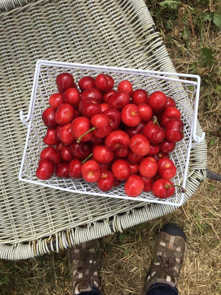 Genesis Organic Farm