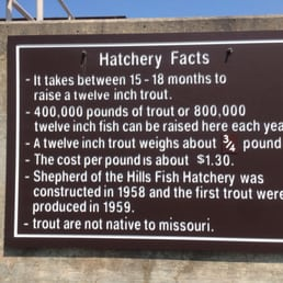 Photos for shepherd of the hills fish hatchery yelp for Fish hatchery branson mo