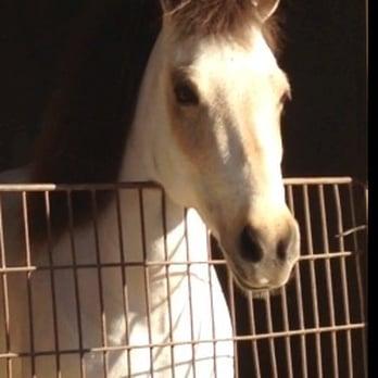 B Amp B Stables Horse Boarding 10730 Artesia Blvd
