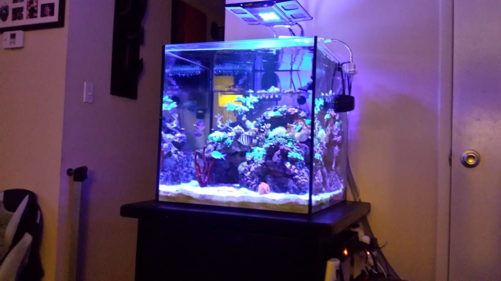Love my cube reef yelp for Discount aquarium fish and reef