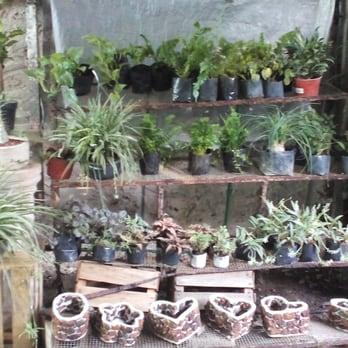 Vivero carolina viveros y jardiner a calle 21 n 78c for Plantas precios viveros