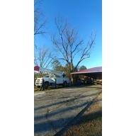 JC Tree Service
