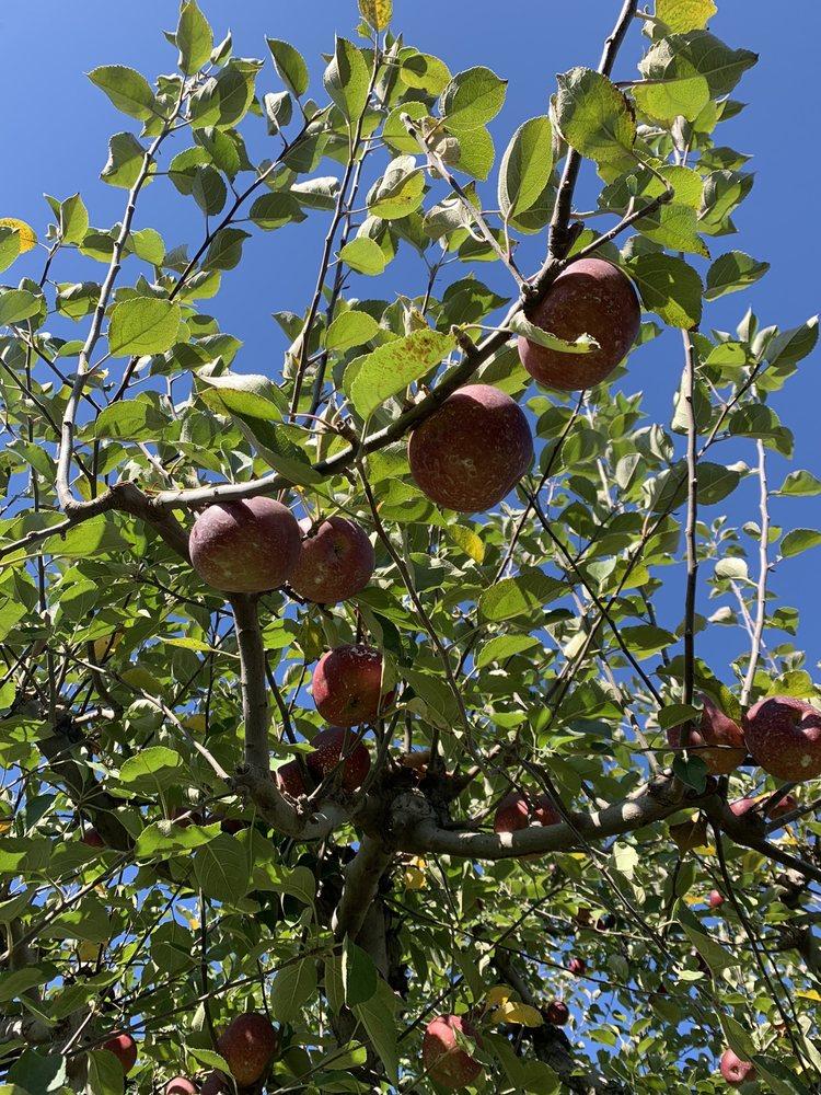 Scott's Orchard: 2163 Scott Rd, Hazel Green, AL