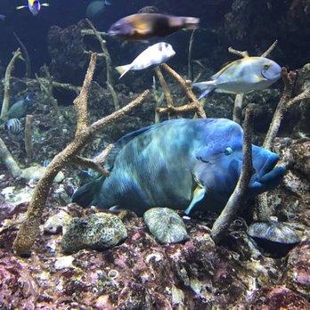 Seattle aquarium 1635 photos 791 reviews aquariums for Big fish seattle