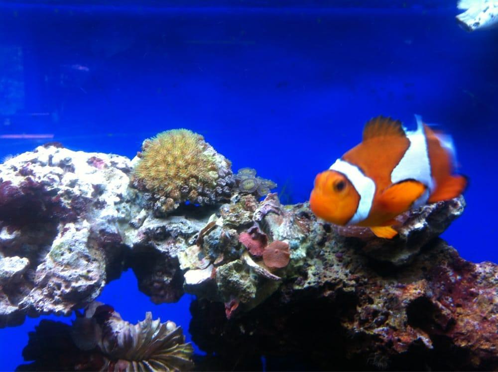 Greendale tropical saltwater fish pet shops 6465 for Salt water fish pets