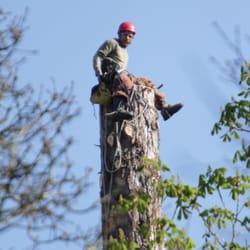 J F Tree Service Inc