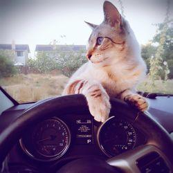 ENMIC 3WAM DRIVER FOR MAC DOWNLOAD