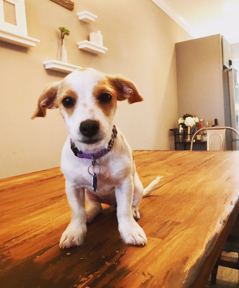Vetter Pet Care