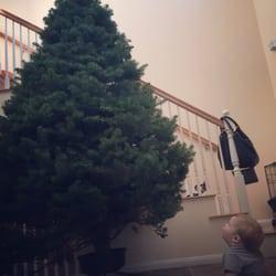 Mr Jingles Christmas Trees - CLOSED - Christmas Trees - 2604 5th Ave ...