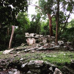 Jard n bot nico dr alfredo barrera mar n 11 fotos for Jardin botanico numero telefonico