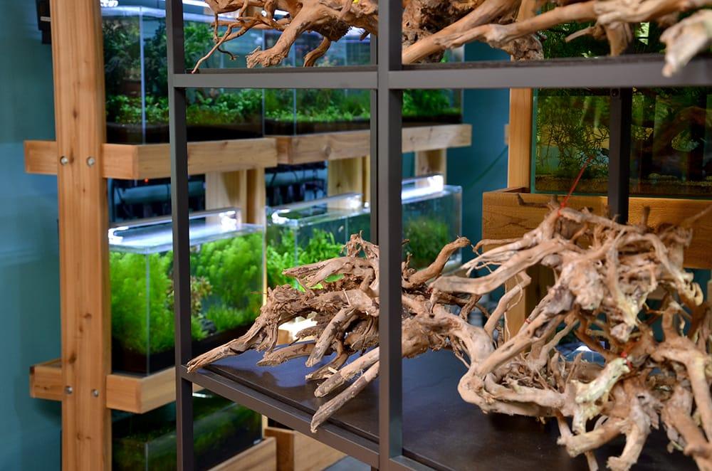 Photo Of Aquarium Zen   Seattle, WA, United States. We Try To Carry