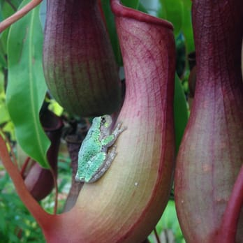 Ordinaire Photo Of Gardeneru0027s Supply Company   Burlington, VT, United States.  Greenhouse Critters