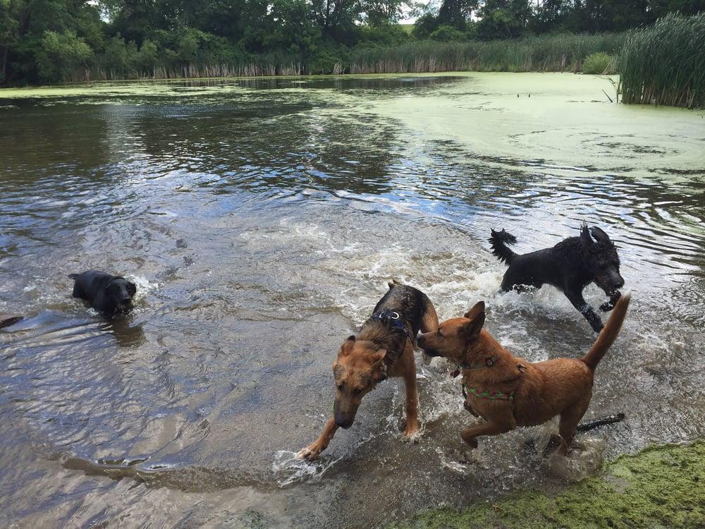 bloomington dog parks