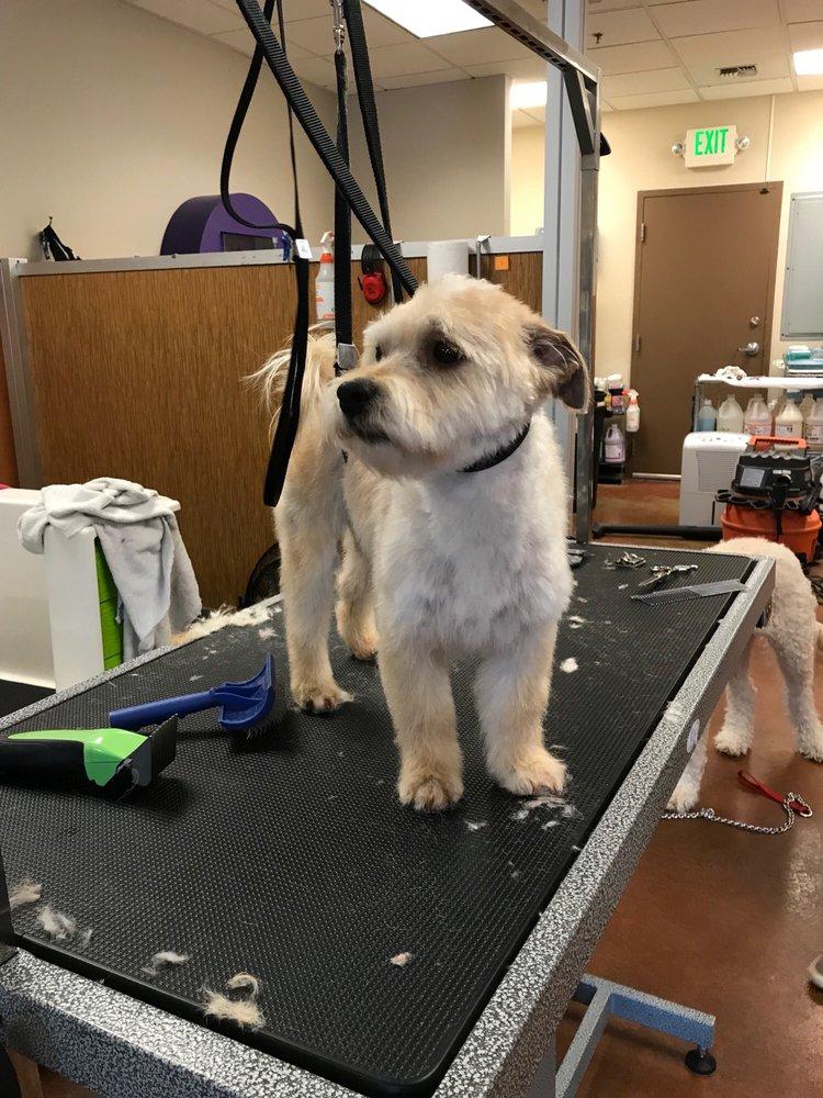 Pup Scrub: 9718 NE 119th Way, Kirkland, WA