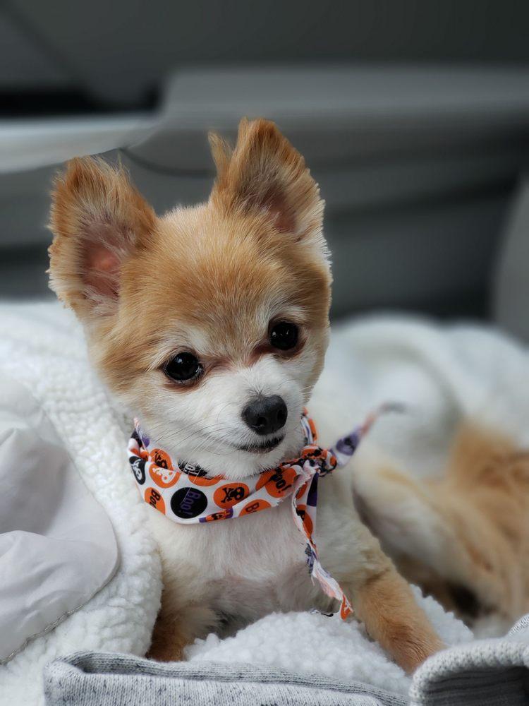 Dog Spaw 2 Hour Grooms: 26565 Maple Valley Black Diamond Rd SE, Maple Valley, WA