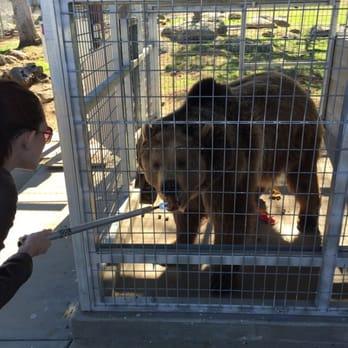 Lions Tigers Amp Bears Big Cat Rescue Community Service
