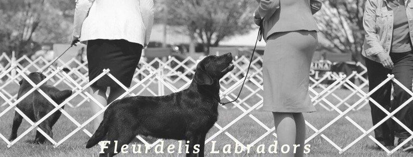 Fleurdelis Labradors: Montross, VA