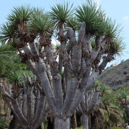 Jardin botanico canario viera y clavijo 51 photos - Jardin botanico las palmas ...